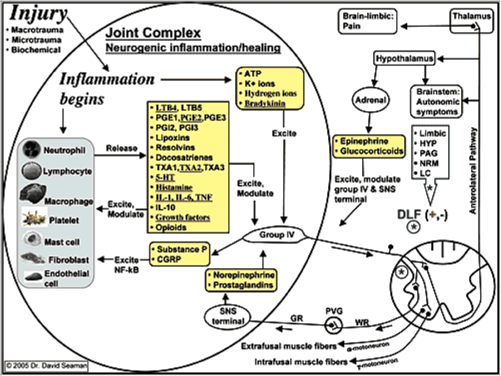 Inflammation and nociception